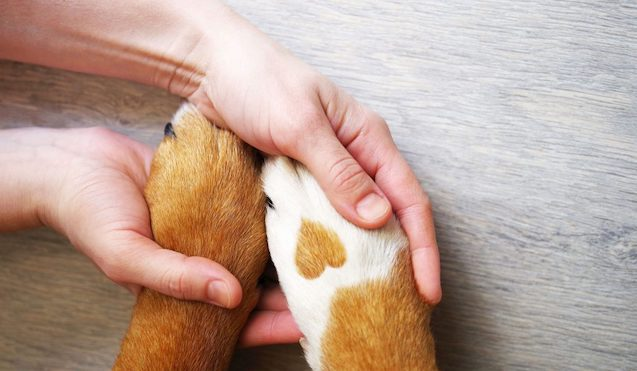 Rhode Island Emotional Support Animal